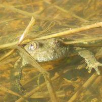 dossier CNPN dérogation espèce protégée Autorité environnementale